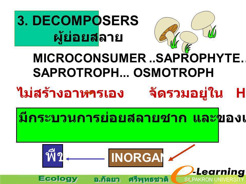 พืช 3. DECOMPOSERS ผู้ย่อยสลาย