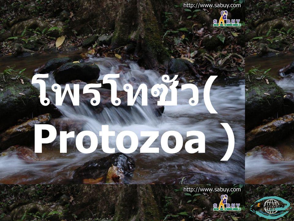 โพรโทซัว( Protozoa )