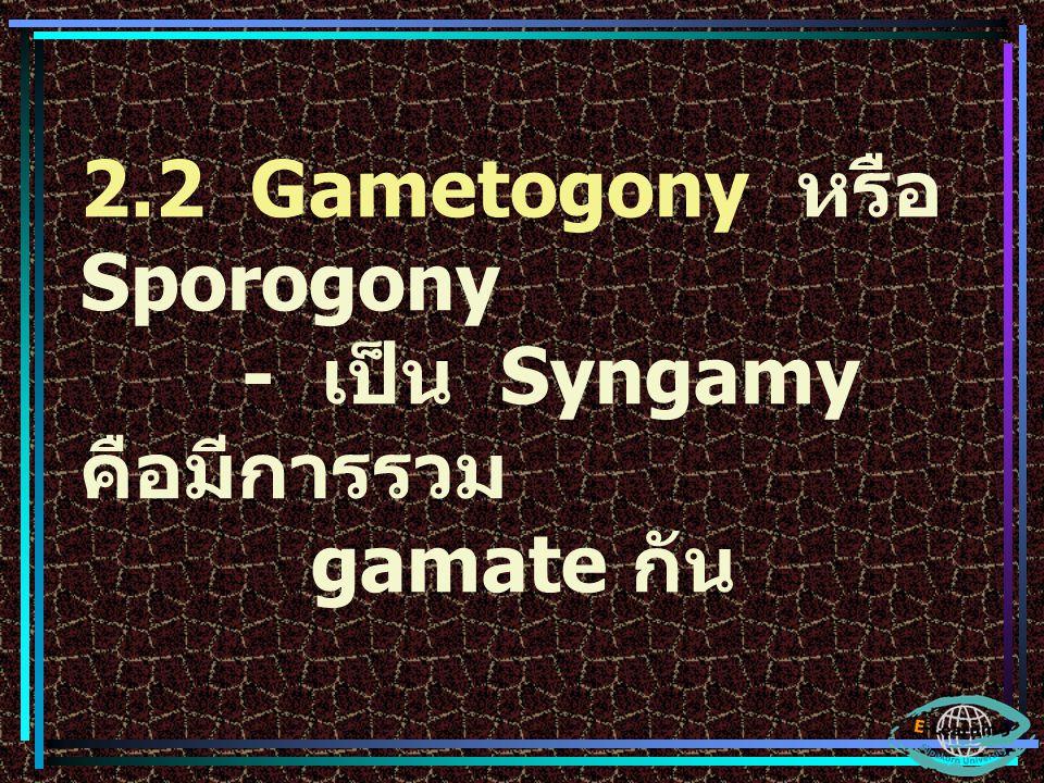 2.2 Gametogony หรือ Sporogony