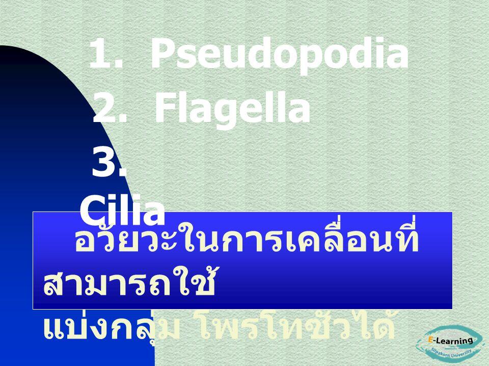 2. Flagella 3. Cilia อวัยวะในการเคลื่อนที่ สามารถใช้