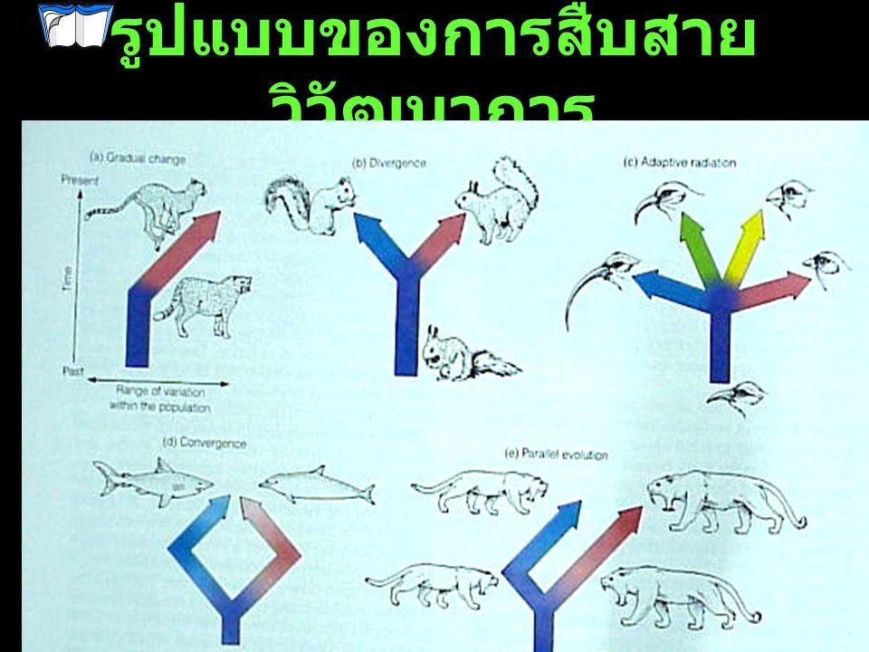 รูปแบบของการสืบสายวิวัฒนาการ