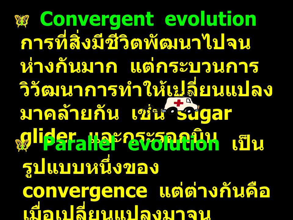 Convergent evolution การที่สิ่งมีชีวิตพัฒนาไปจนห่างกันมาก แต่กระบวนการวิวัฒนาการทำให้เปลี่ยนแปลงมาคล้ายกัน เช่น sugar glider และกระรอกบิน