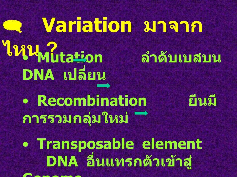  Variation มาจากไหน Mutation ลำดับเบสบน DNA เปลี่ยน