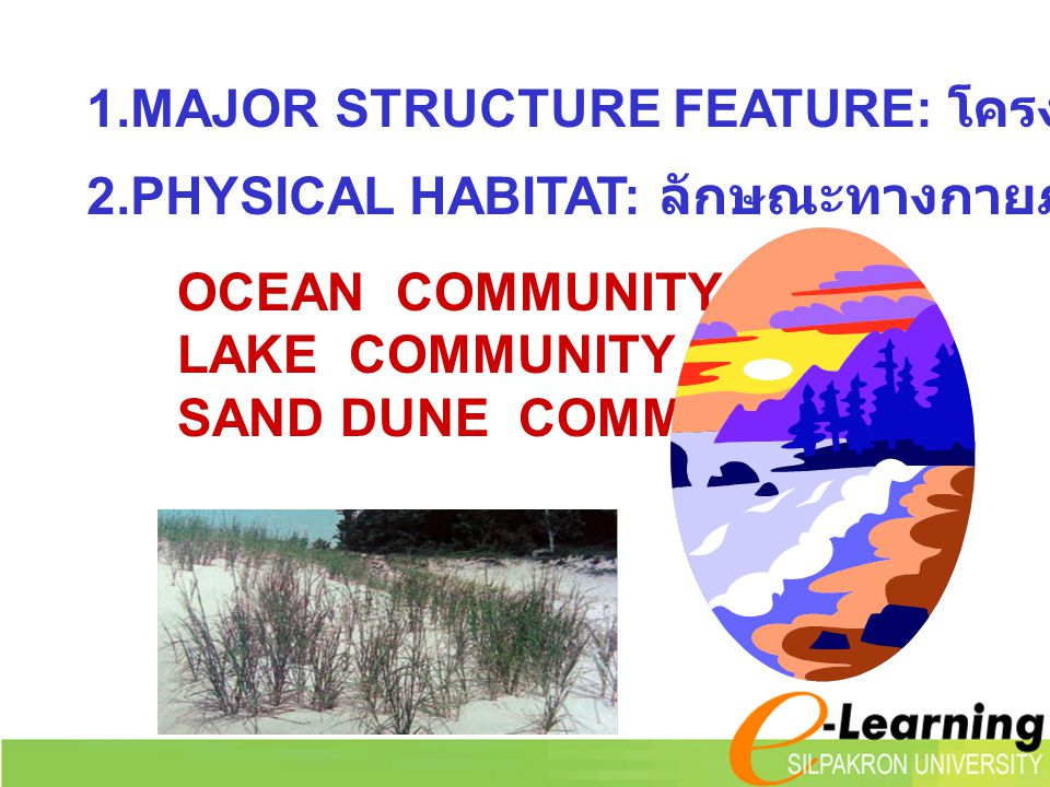 1.MAJOR STRUCTURE FEATURE: โครงสร้างหลักของสังคม