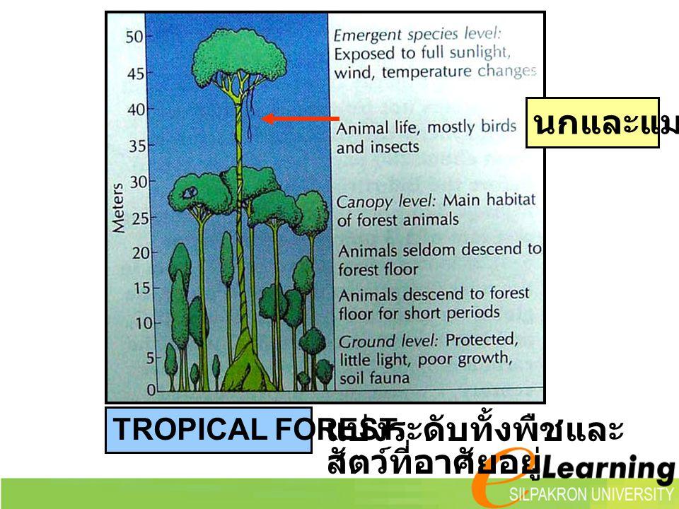 แบ่งระดับทั้งพืชและสัตว์ที่อาศัยอยู่