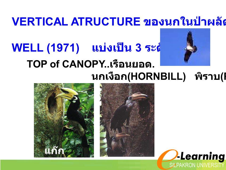 VERTICAL ATRUCTURE ของนกในป่าผลัดใบ