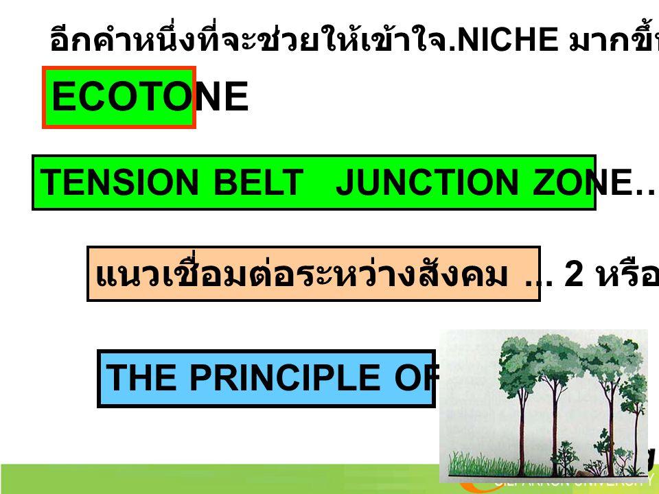 ECOTONE TENSION BELT JUNCTION ZONE…แนวเชื่อมต่อ