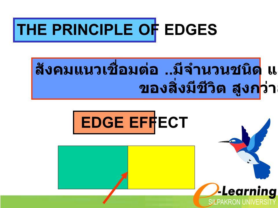THE PRINCIPLE OF EDGES สังคมแนวเชื่อมต่อ ..มีจำนวนชนิด และความหนาแน่น. ของสิ่งมีชีวิต สูงกว่าสังคมทั่วไป.