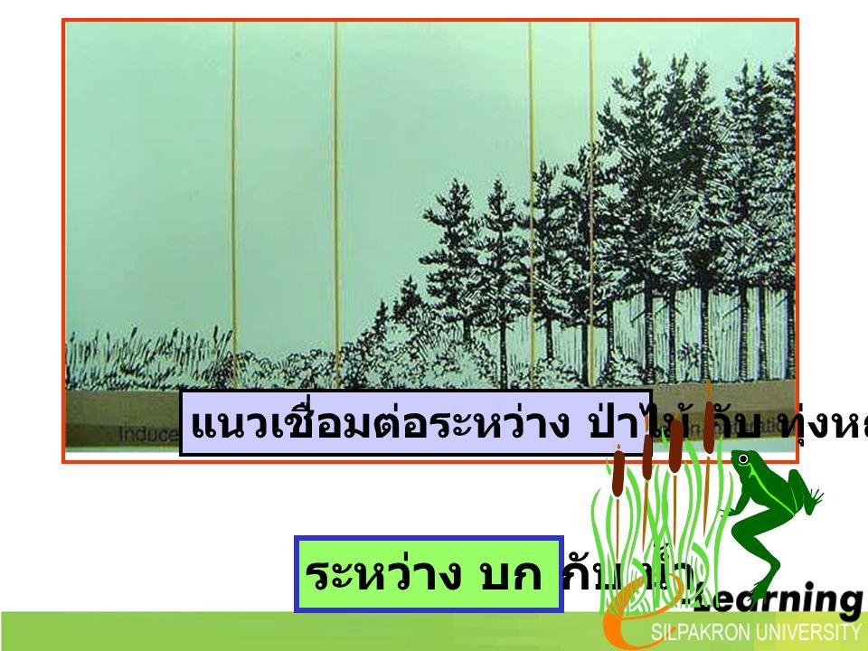 แนวเชื่อมต่อระหว่าง ป่าไม้ กับ ทุ่งหญ้า