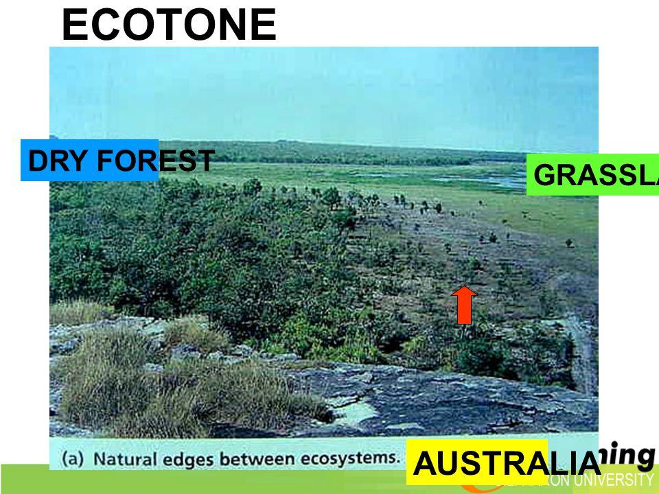 ECOTONE DRY FOREST GRASSLAND AUSTRALIA