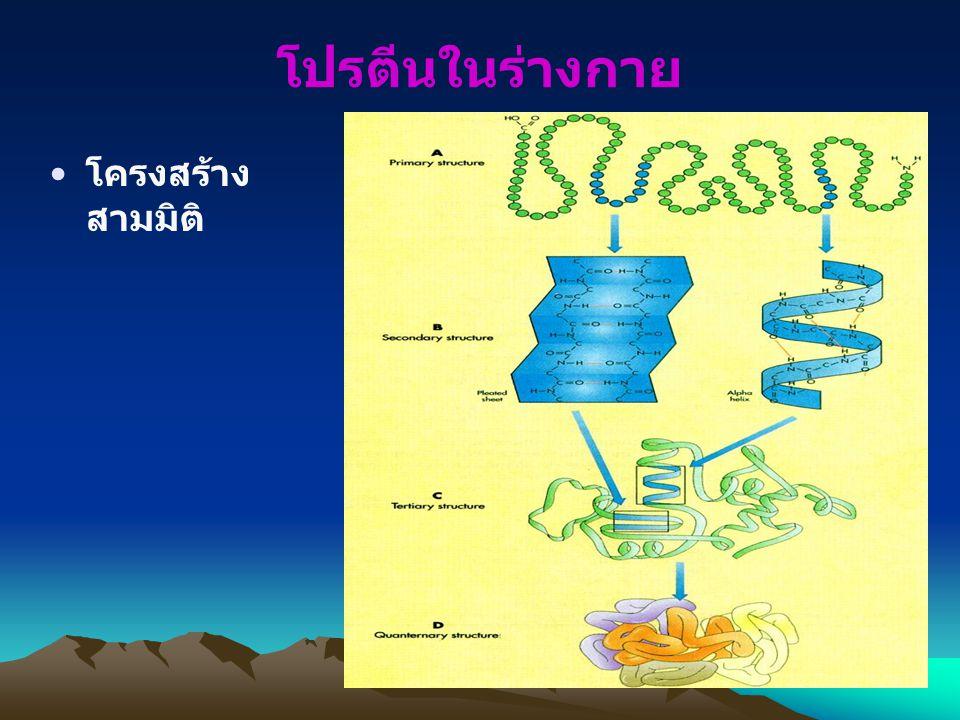 โปรตีนในร่างกาย โครงสร้างสามมิติ