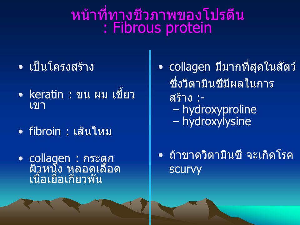 หน้าที่ทางชีวภาพของโปรตีน : Fibrous protein