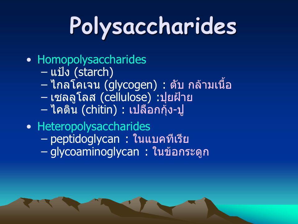 Polysaccharides Homopolysaccharides แป้ง (starch)