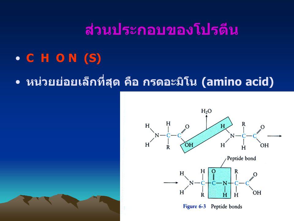 ส่วนประกอบของโปรตีน C H O N (S)