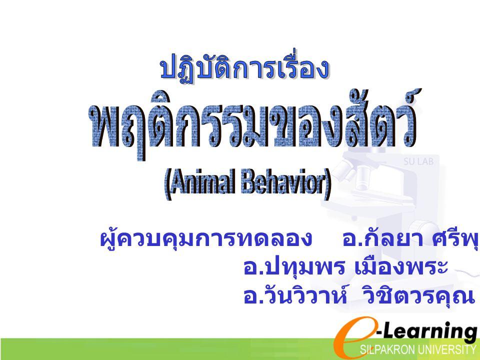 ปฏิบัติการเรื่อง พฤติกรรมของสัตว์ (Animal Behavior) ผู้ควบคุมการทดลอง อ.กัลยา ศรีพุทธชาติ อ.ปทุมพร เมืองพระ.