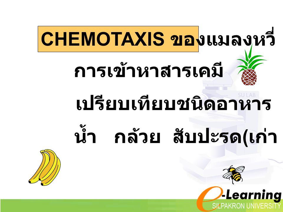 CHEMOTAXIS ของแมลงหวี่