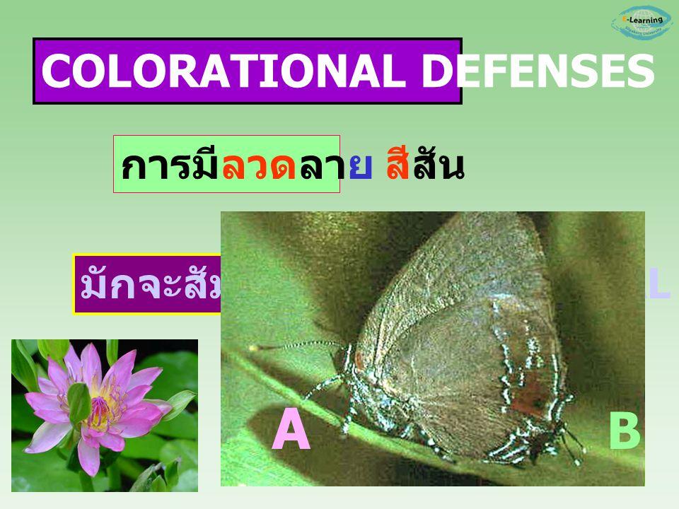 A B COLORATIONAL DEFENSES การมีลวดลาย สีสัน