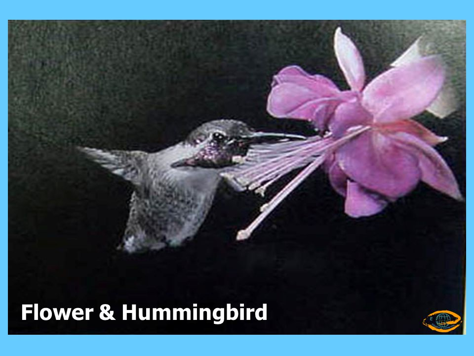 Flower & Hummingbird