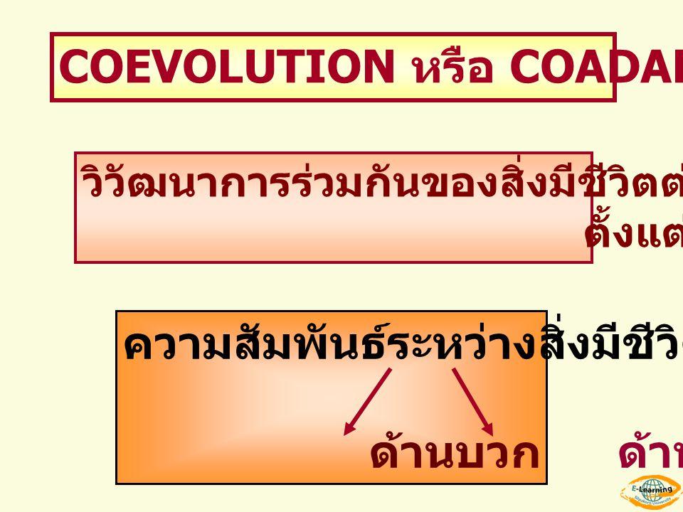 COEVOLUTION หรือ COADAPTATION