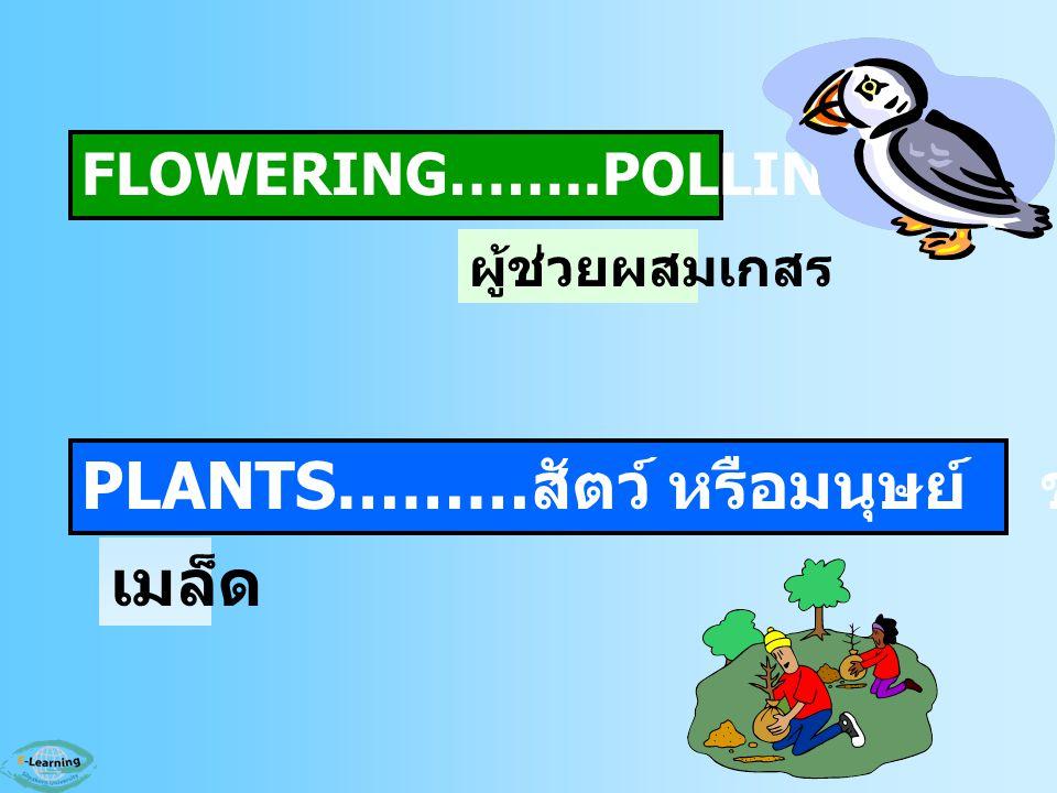 PLANTS………สัตว์ หรือมนุษย์ ช่วยกระจายพันธุ์