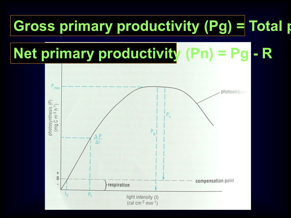Gross primary productivity (Pg) = Total photosynthesis