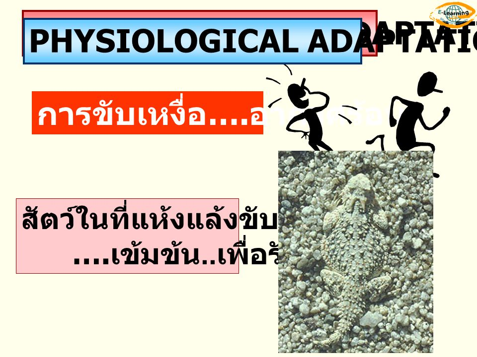 MORPHOLOGICAL ADAPTATION PHYSIOLOGICAL ADAPTATION