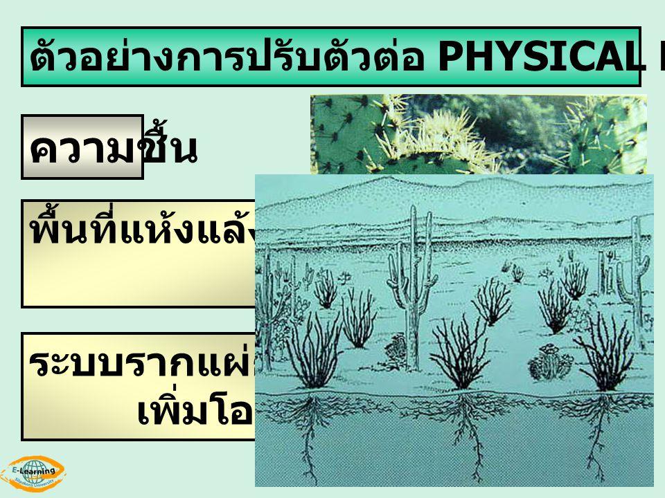 ความชื้น ตัวอย่างการปรับตัวต่อ PHYSICAL ENVIRONMENT