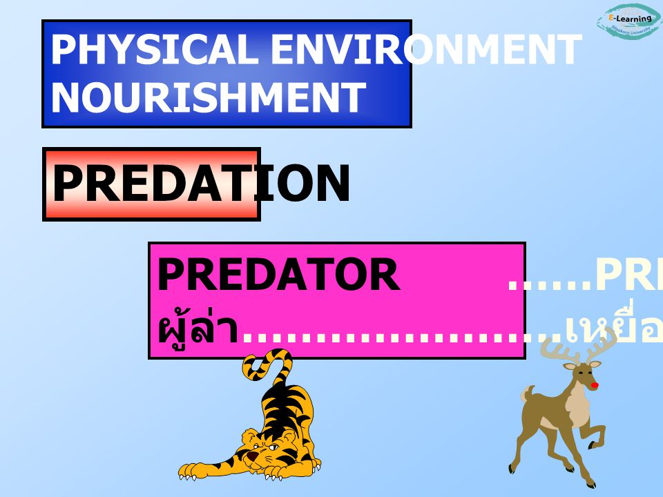 PREDATION PREDATOR ……PREY ผู้ล่า………………….เหยื่อ PHYSICAL ENVIRONMENT