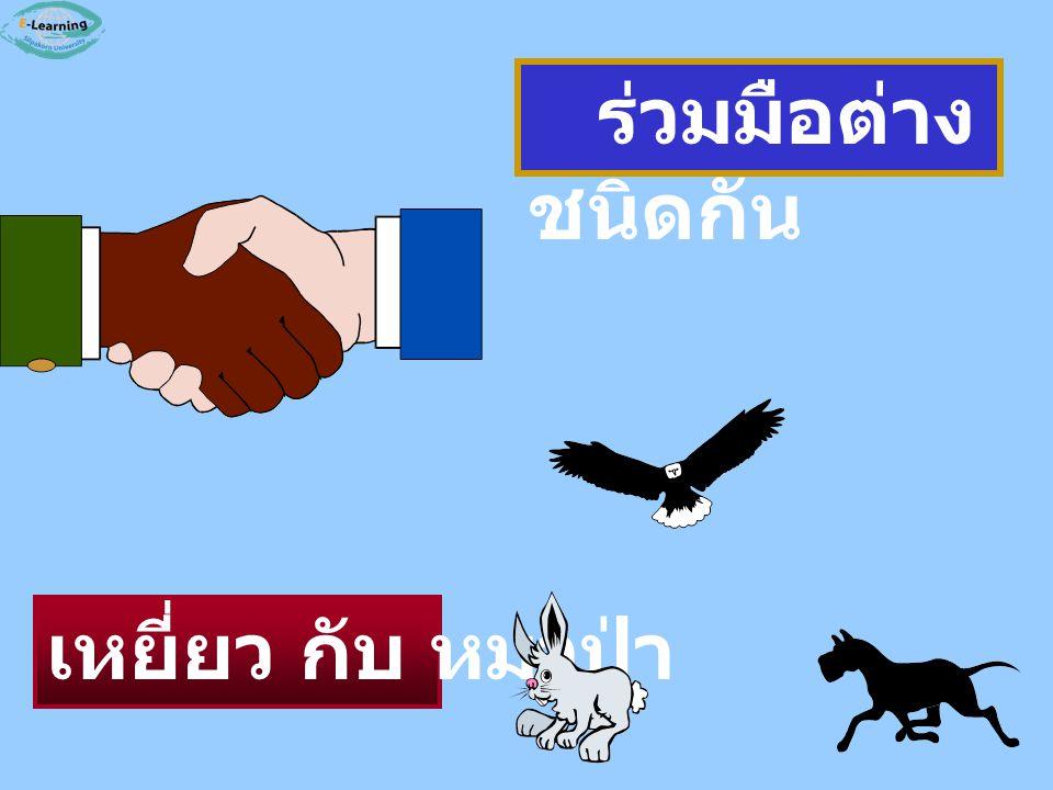 ร่วมมือต่างชนิดกัน เหยี่ยว กับ หมาป่า
