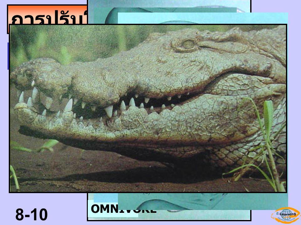 สัตว์กินเนื้อ มีฟัน 4 แบบ