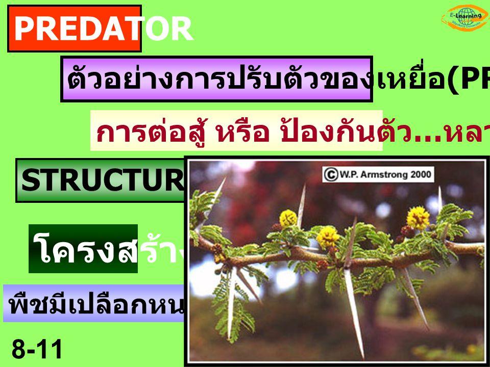 โครงสร้าง PREDATOR ตัวอย่างการปรับตัวของเหยื่อ(PREY)