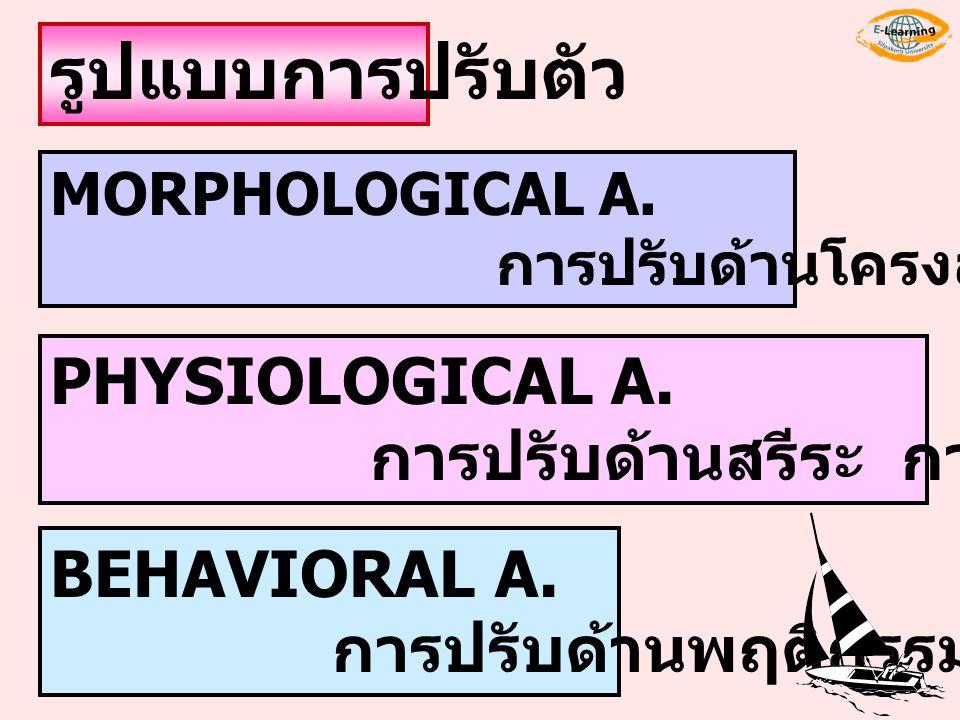 รูปแบบการปรับตัว PHYSIOLOGICAL A. การปรับด้านสรีระ การทำงานในร่างกาย