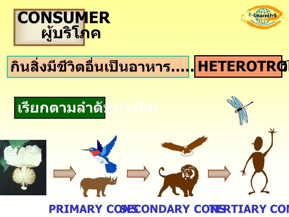 CONSUMER ผู้บริโภค กินสิ่งมีชีวิตอื่นเป็นอาหาร……ส่วนมาก..สัตว์