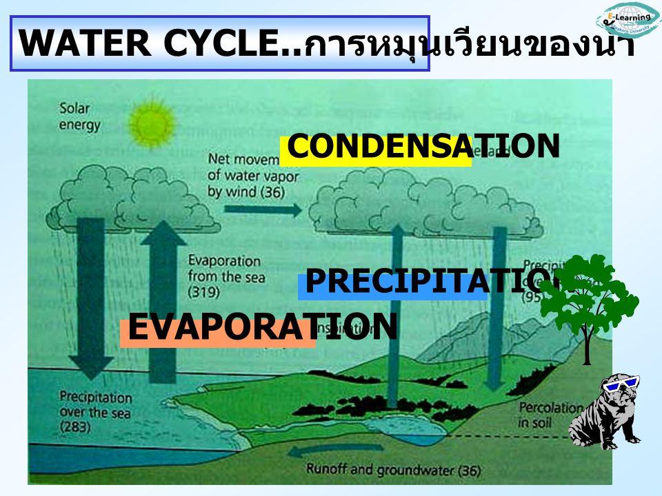 WATER CYCLE..การหมุนเวียนของน้ำ