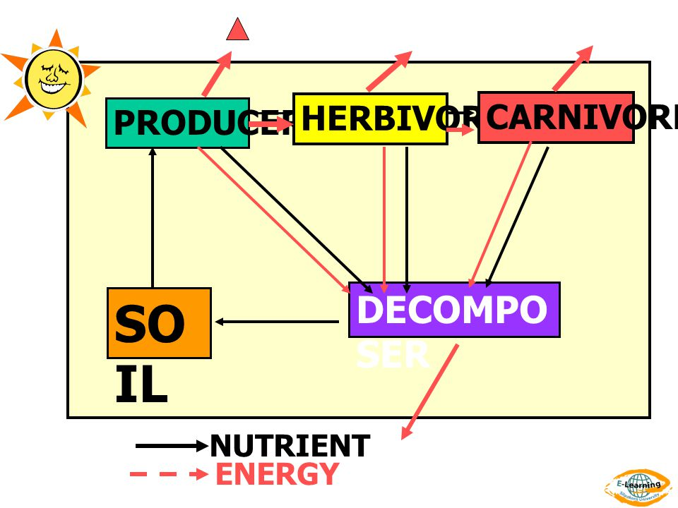PRODUCER HERBIVORE CARNIVORE DECOMPOSER SOIL NUTRIENT ENERGY