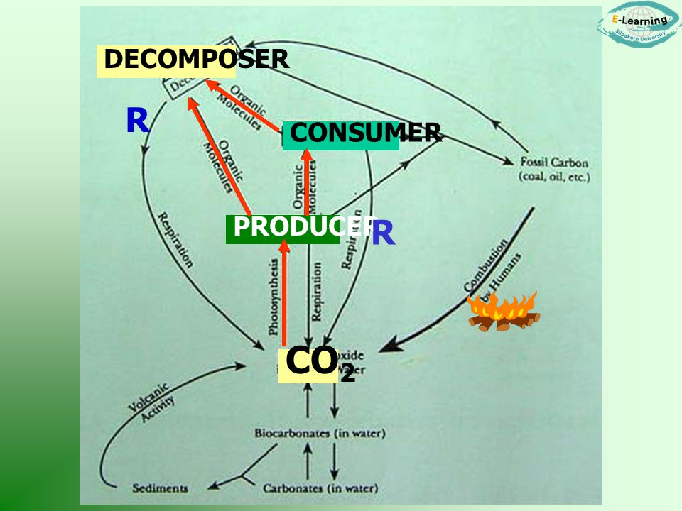 DECOMPOSER R CONSUMER R PRODUCER CO2