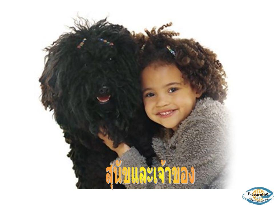 สุนัขและเจ้าของ