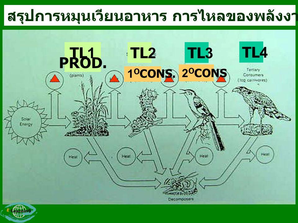 สรุปการหมุนเวียนอาหาร การไหลของพลังงาน และTROPHIC LEVEL