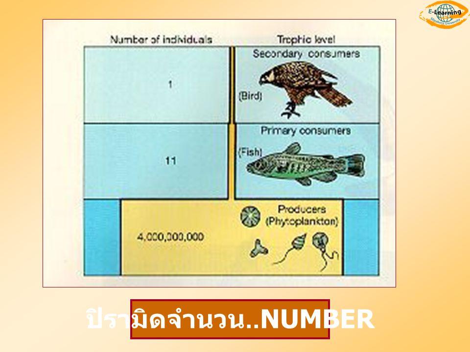 ปิรามิดจำนวน..NUMBER