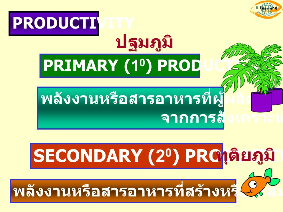 SECONDARY (20) PRODUCTIVITY ทุติยภูมิ
