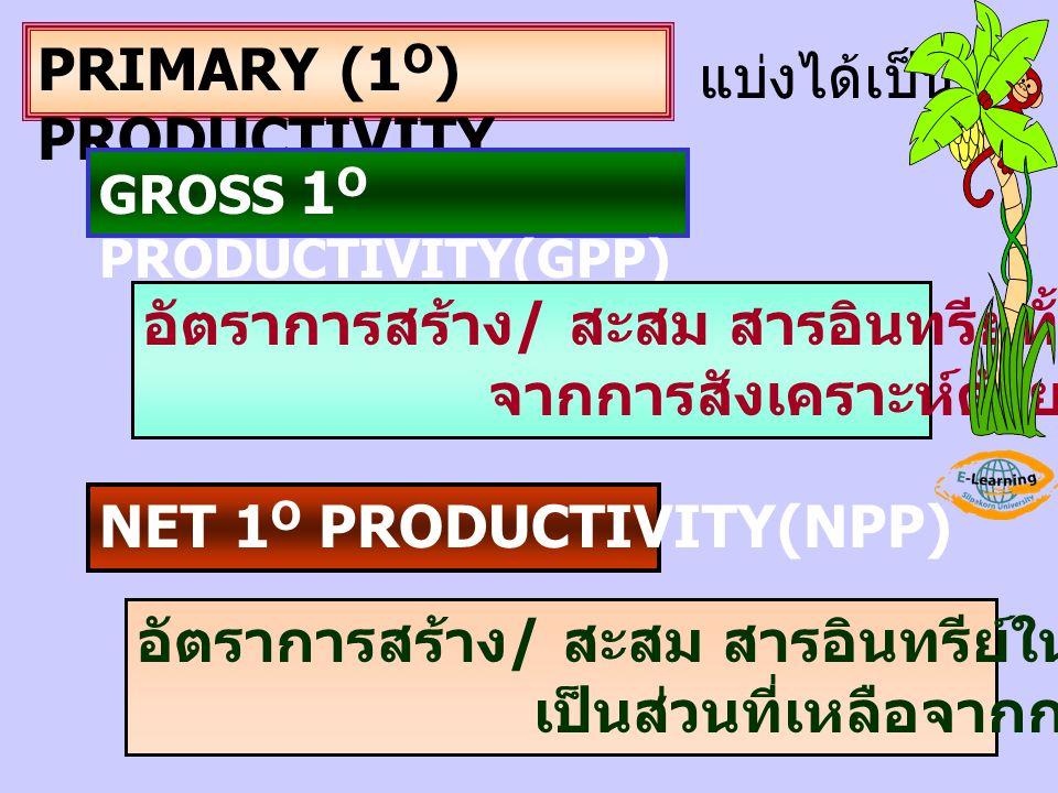 PRIMARY (1O) PRODUCTIVITY แบ่งได้เป็น