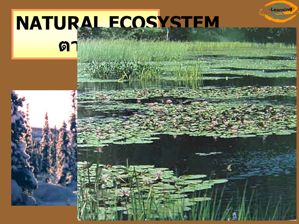 NATURAL ECOSYSTEM ตามธรรมชาติ
