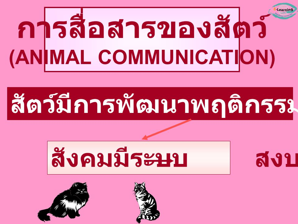 (ANIMAL COMMUNICATION)