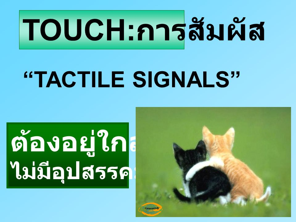 TOUCH:การสัมผัส TACTILE SIGNALS ต้องอยู่ใกล้กัน ไม่มีอุปสรรคมากั้น