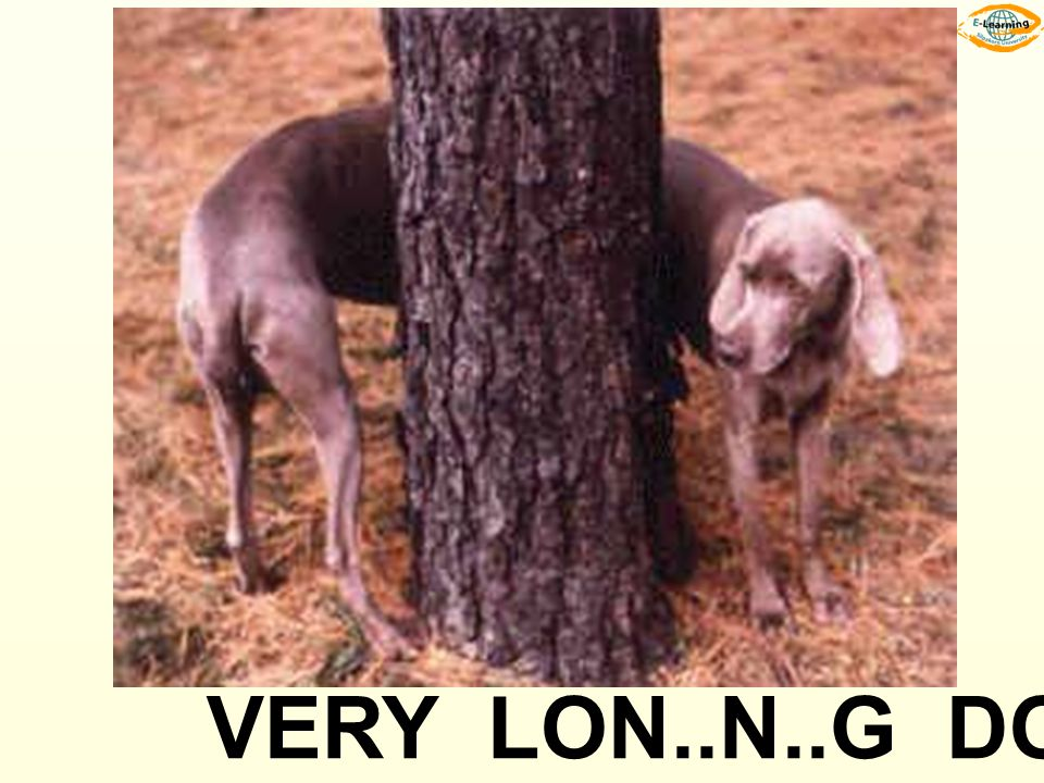VERY LON..N..G DOG