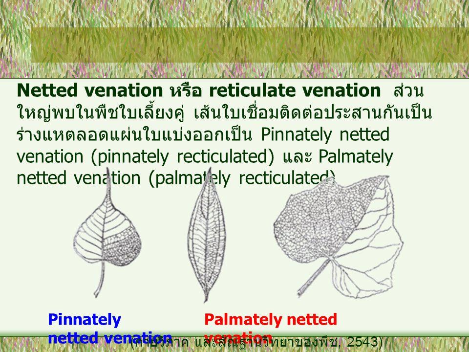 Netted venation หรือ reticulate venation ส่วนใหญ่พบในพืชใบเลี้ยงคู่ เส้นใบเชื่อมติดต่อประสานกันเป็นร่างแหตลอดแผ่นใบแบ่งออกเป็น Pinnately netted venation (pinnately recticulated) และ Palmately netted venation (palmately recticulated)