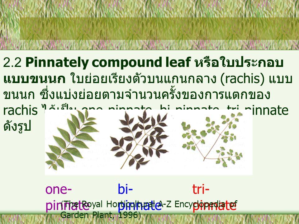 2.2 Pinnately compound leaf หรือใบประกอบแบบขนนก ใบย่อยเรียงตัวบนแกนกลาง (rachis) แบบขนนก ซึ่งแบ่งย่อยตามจำนวนครั้งของการแตกของ rachis ได้เป็น one-pinnate, bi-pinnate, tri-pinnate ดังรูป