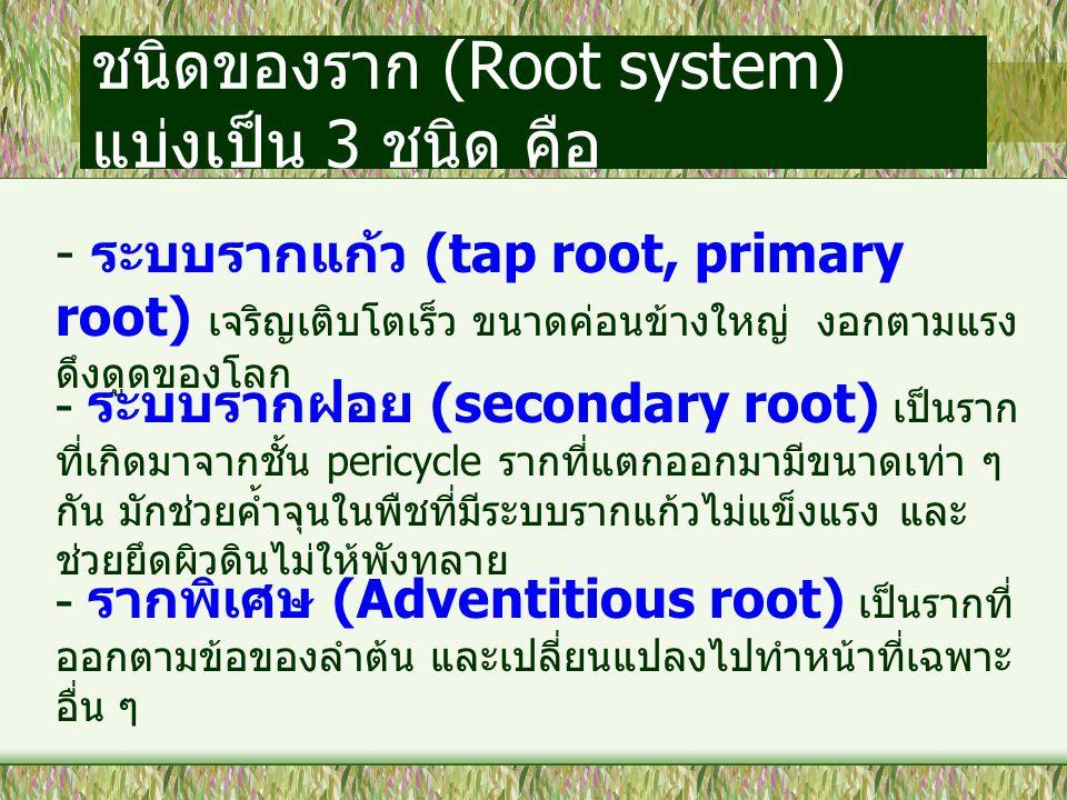 ชนิดของราก (Root system) แบ่งเป็น 3 ชนิด คือ
