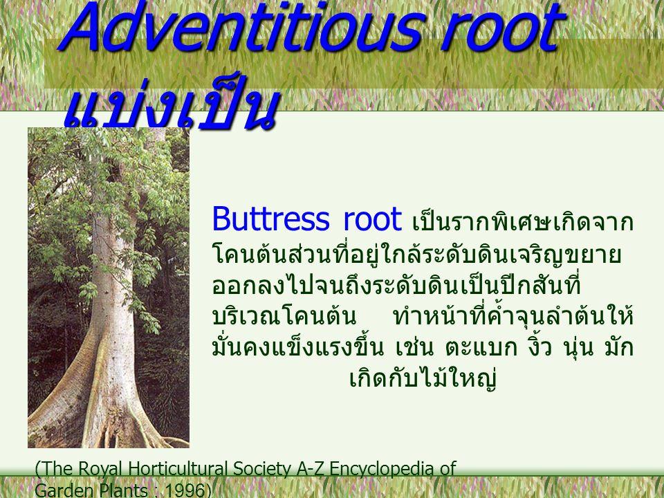 Adventitious root แบ่งเป็น