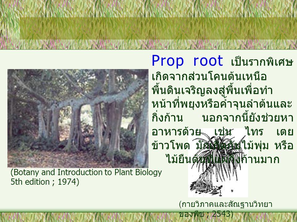 Prop root เป็นรากพิเศษเกิดจากส่วนโคนต้นเหนือพื้นดินเจริญลงสู่พื้นเพื่อทำหน้าที่พยุงหรือค้ำจุนลำต้นและกิ่งก้าน นอกจากนี้ยังช่วยหาอาหารด้วย เช่น ไทร เตย ข้าวโพด มักเกิดกับไม้พุ่ม หรือไม้ยืนต้นที่แผ่กิ่งก้านมาก